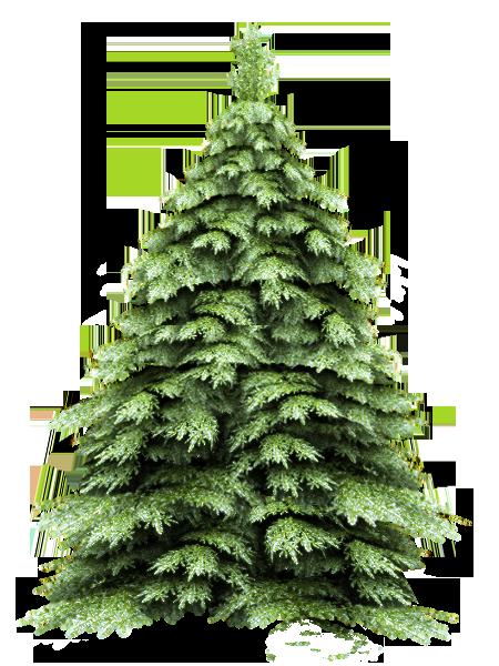 елка новогодняя в картинках для детей